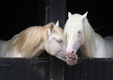 Two Stallions Royalty Free Stock Photography
