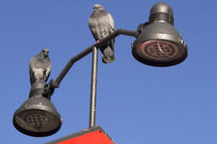 Two standing pigeons Royalty Free Stock Image
