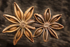 Two Star Anise Royalty Free Stock Photography
