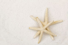 Two star fish, known as sea stars, on white fine sand beach back. Closeup of two star fish, known as sea stars, on white fine sand beach background with stock photography