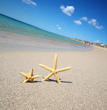 Two starfish Stock Images