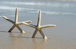 Two starfish. Upright on deserted idyllic beach, with the ocean in the background royalty free stock photography