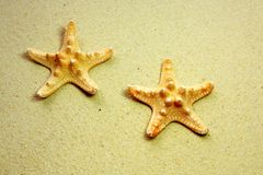 Two starfish on beach Stock Image
