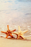 Two starfish on a beach Stock Photo