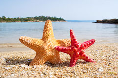Two starfish Royalty Free Stock Image