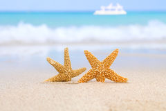 Two starfish on beach, blue sea and white boat Royalty Free Stock Image