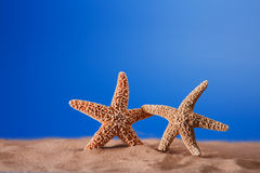 Two starfish on a beach sand Royalty Free Stock Photo