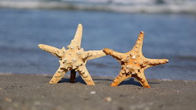 Two starfish on the beach. In summer stock video footage