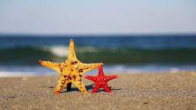 Two starfish. Big and small starfish on the beach in summer stock video