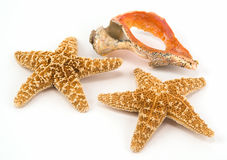 Two Starfish with a colorful broken shell Stock Photos