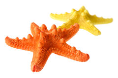 Two starfish. Isolated objects: two starfish, orange and yellow, isolated on white background, closeup shot, perspective blur Royalty Free Stock Photo