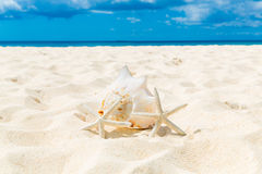 Two starfish and large shell on a sandy tropical beach. Stock Photo