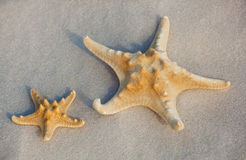 Two starfish lie on the sand on the coast of the sea. Royalty Free Stock Photo