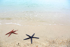 Two starfish lying on a sandy beach Royalty Free Stock Images