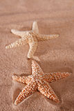 Two Starfish On A Beach Sand Stock Photography