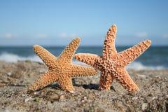 Free Two Starfish On Beach Stock Image - 12018741