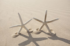 Two Starfish on sand Stock Images