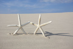 Two Starfish on sand Stock Photo