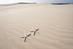 Two Starfish on sand Royalty Free Stock Images