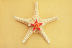Two starfish on sand Royalty Free Stock Photos