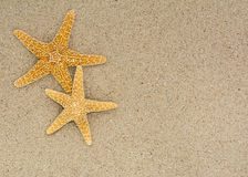 Two starfish on sand background on a beach Stock Image
