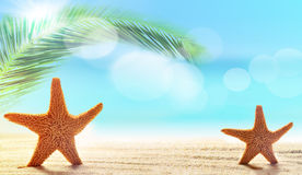 Two starfish in sand on the beach Royalty Free Stock Photos