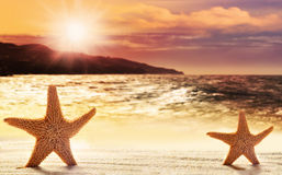 Two starfish in sand on the beach Stock Photo