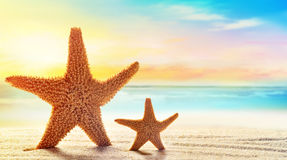 Two starfish in sand on the beach Royalty Free Stock Image