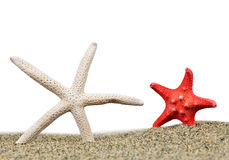 Two starfish in sand Royalty Free Stock Photos