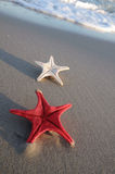 Two starfish on sandy beach Stock Images