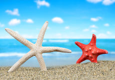 Two starfish Royalty Free Stock Images