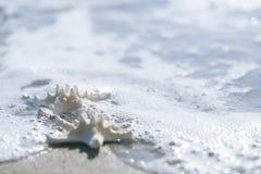 Two starfish on sea ocean beach in Florida, Stock Image