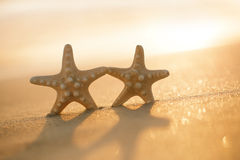 Two starfish on sea ocean beach in Florida, soft gentle sunrise. Light color Stock Image