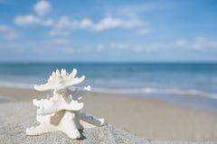Two starfish on sea ocean beach in Florida, soft gentle sunrise Stock Photo