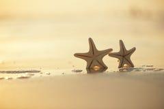 Two starfish on sea ocean beach in Florida, soft gentle sunrise. Light color Stock Photo