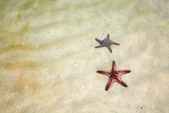 Two starfish and sea Royalty Free Stock Images