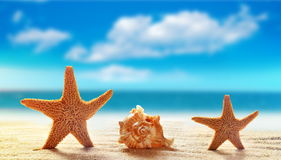 Two starfish and seashell on white sand beach with ocean royalty free stock images