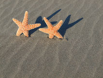 Two Starfish with Shadows Royalty Free Stock Photo
