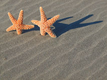 Two Starfish with Shadows Stock Photos
