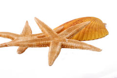 Two Starfish and Shell on the white background Royalty Free Stock Photography