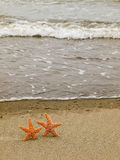 Two Starfish on the Shoreline Stock Images