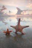 Two starfish on summer beach Stock Photos