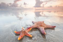 Two starfish on a summer beach royalty free stock photos
