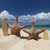 Two starfish surfers on beach Royalty Free Stock Photo