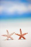 Two starfish on tropical beach Royalty Free Stock Images