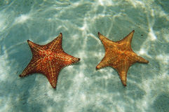 Two starfish underwater with sunlight on the sand Royalty Free Stock Photos