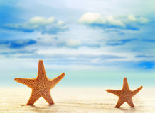 Two starfish on white sand beach with ocean royalty free stock photo