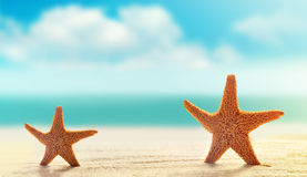 Two starfish on white sand beach with ocean royalty free stock images