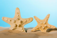 Two starfishes background. Royalty Free Stock Photo