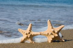 Two starfishes on the beach Royalty Free Stock Photography